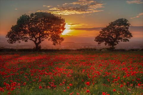 Bild på äng med blommor